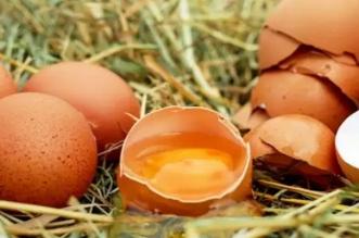 नकली अंडे
