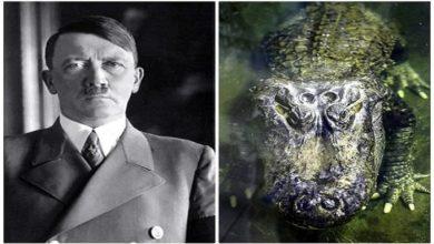 हिटलर के पालतू मगरमच्छ की हुई मौत