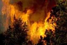 उत्तराखंड के जंगलों में आग