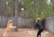 डॉगी ने खेला वॉलीबॉल