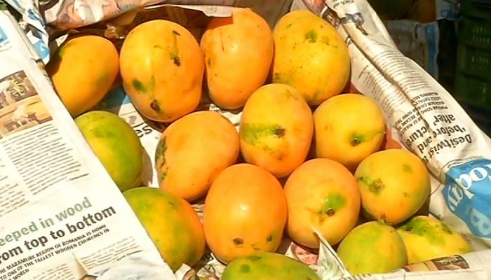 आम्रपाली आम
