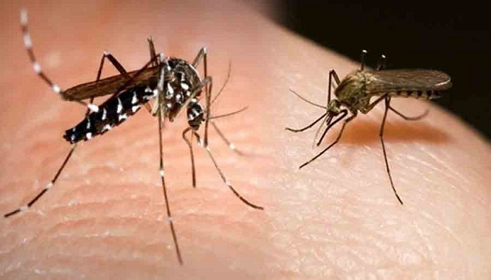 मच्छर खून