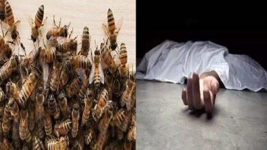 मधुमक्खियों का हमला