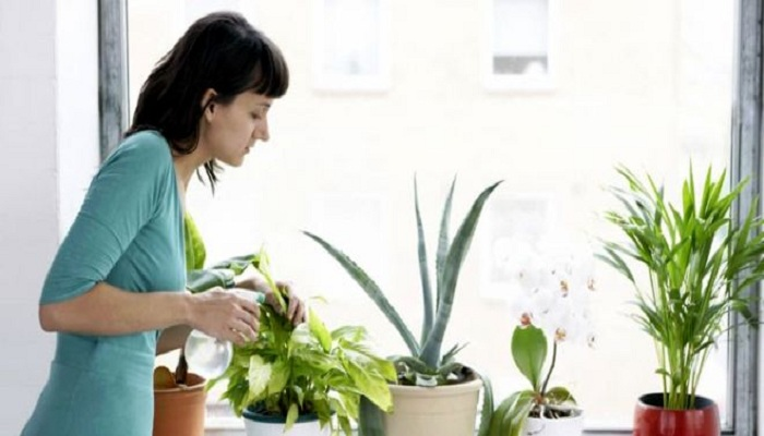Indoor plants to make house pollution free