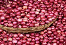 onion प्याज
