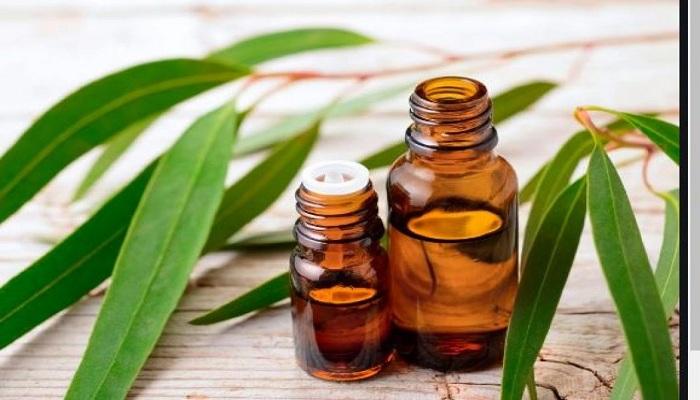 nilgiri oil