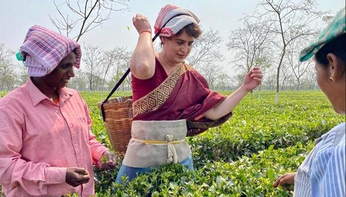 प्रियंका गांधी ने तोड़ीं चाय की पत्तियां Priyanka Gandhi breaks tea leaves with tea