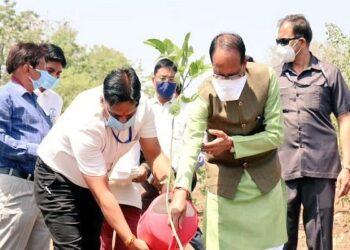स्मार्ट उद्यान में मध्यप्रदेश के मुख्यमंत्री ने स्मार्ट उद्यान में लगाया करंज का पौधा