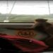 monkey traveled in metro