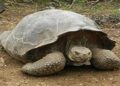 tortoise with 21 nails
